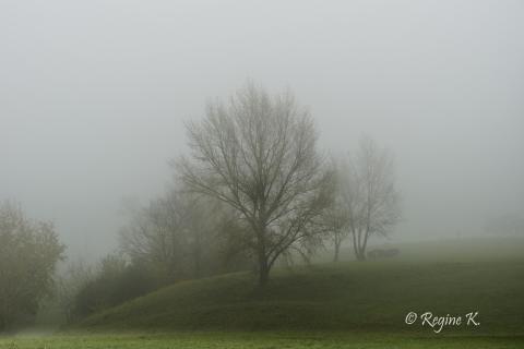 39_Herbst im Nebel_Regine _Kronowetter