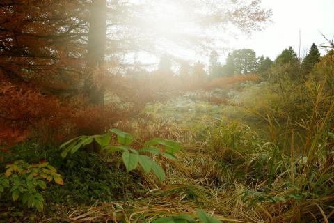 39_Herbst-im-Nebel_Janina_Morzinek.jpg