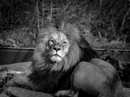 Dreaming King