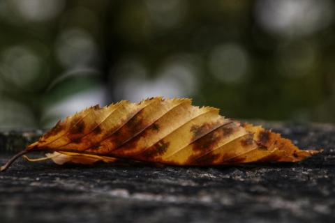Herbst im Einzug