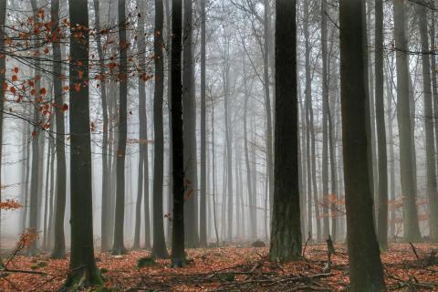 39_Herbst_im_Nebel_Barbara_Figge