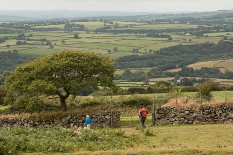 Das Dartmoor