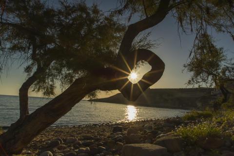 Abendsonne im Olivenbaum gefangen