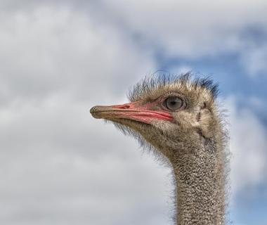 Ein komischer Vogel