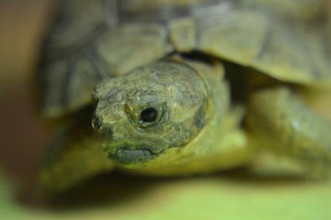 neugierige Schildkröte