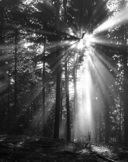 Waldruhe