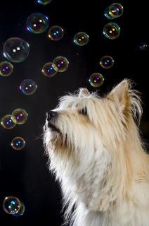 Im Seifenblasenregen