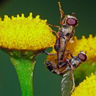 Fliegen Sex