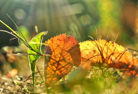 Herbst Impression