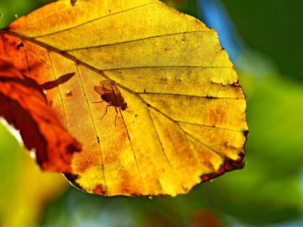 Fliege auf der Sonnenbank