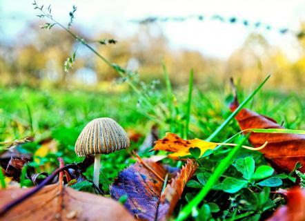 Kleiner Pilz in großer Wiese