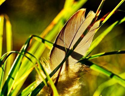 Vogelfeder im Gras