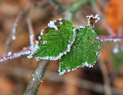 Winterliches Stillleben