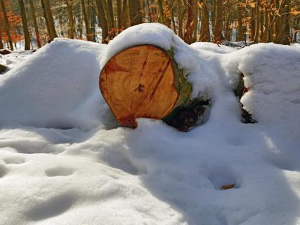 Holzstapel unter Schneedecke