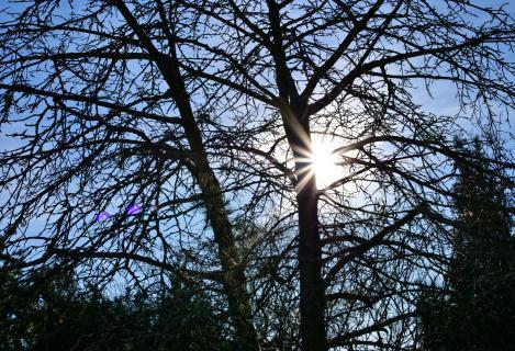Ein sonniger Tag im Februar