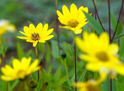 gelbe Sonnen