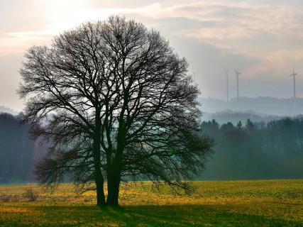 Einsamer Baum im Morgenlicht