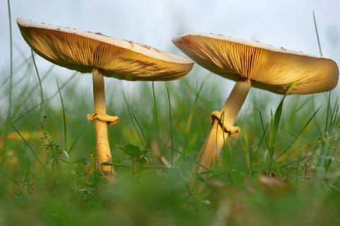 Herbst... Zeit der Pilze