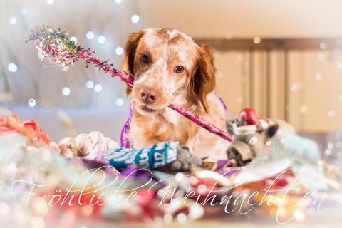 Merry Christmas, Joyeux noel, Buon Natale, Feliz navidad