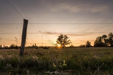 Sonnenuntergang in den Wiesen