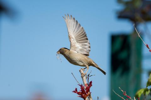 Fliege! / Fly!