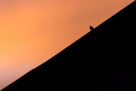 Vogel / Bird