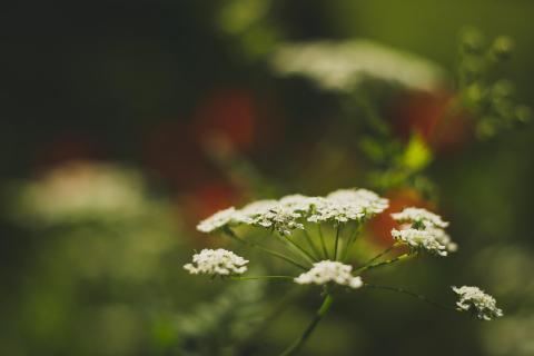 In der Wiese / In the meadow