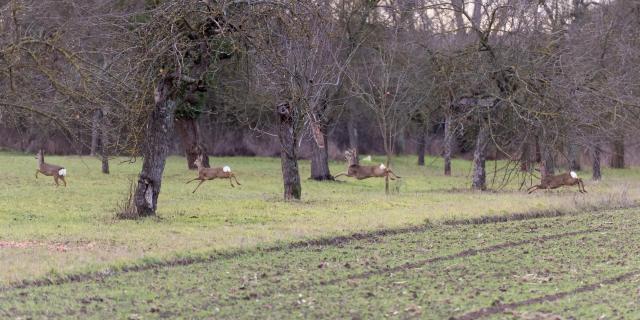Durch die Streuobstwiesen - Through the orchards