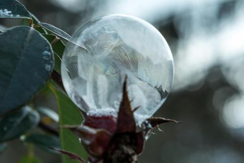 Seifenblase - Frozen bubble