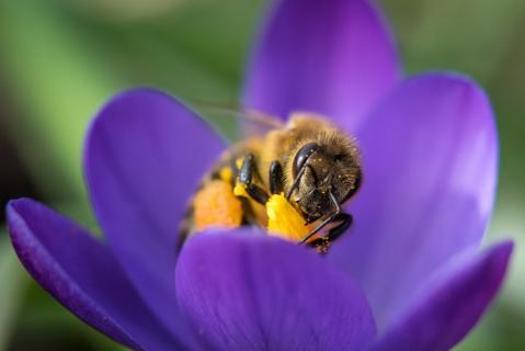 Bienen-Portrait