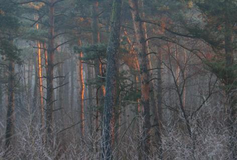 Waldleuchten