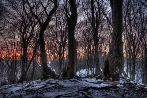Frost-Wald