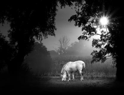 Pferd im Morgennebel Bodo_Kühle