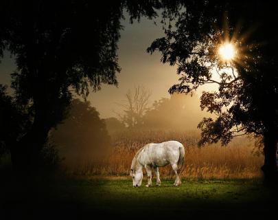 Pferd im Morgennebel