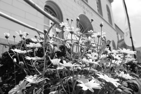 Blüte form Rathaus