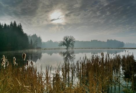 Fischteich im Morgenlicht