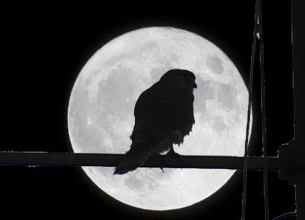 Fälkchen im Mond