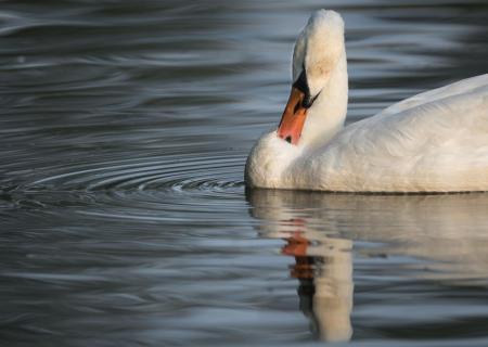 2 Spiegelung im Wasser_Cordula_Peheim