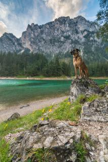 12 Fotografieren Sei ihr Haustier_Cordula_Peheim