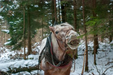 51 fotografieren Sie ein Winterbild_Cordula.Peheim