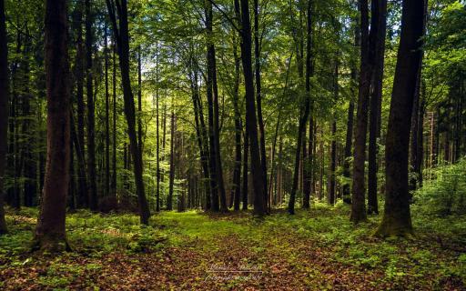 Abkühlung in den fränkischen Wäldern