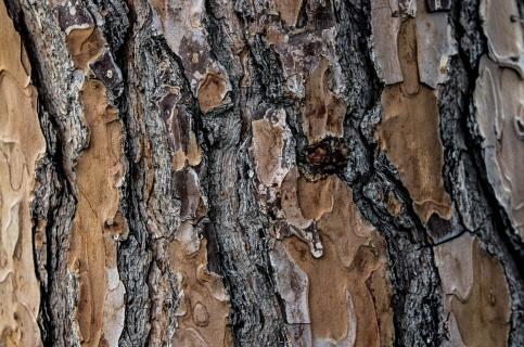Baum Stamm Struktur