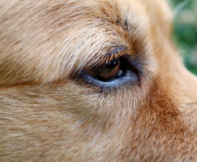 Wettbewerb Haustiere, Hundeauge