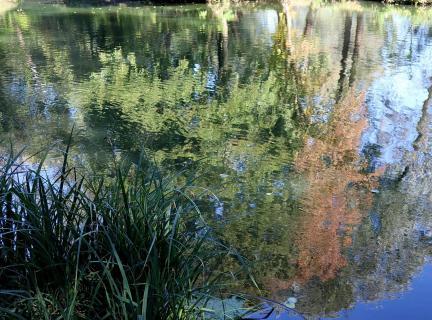 Wasserspiegel Bäume 2