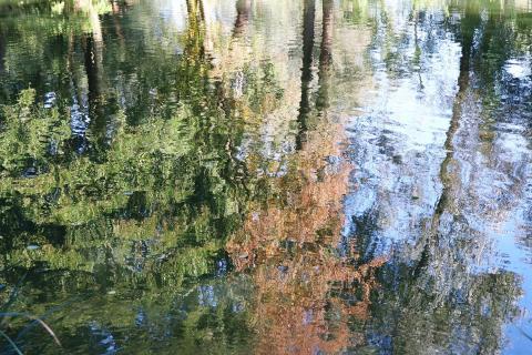 Wasserspiegel Bäume 1