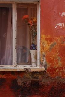 Fenster mit Blume