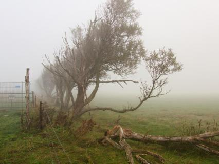 39 Herbst im Nebel_Astrid_Reger