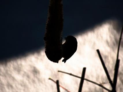 33 Silhouette_Astrid_Reger