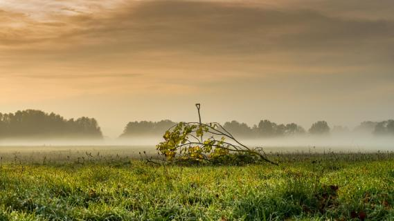 Nebel am Weserbogen