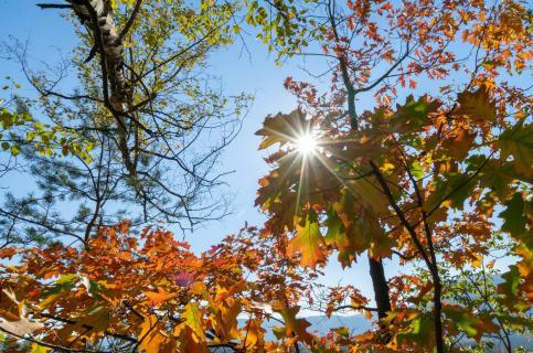 Warme Herbstsonne im Blätterwald